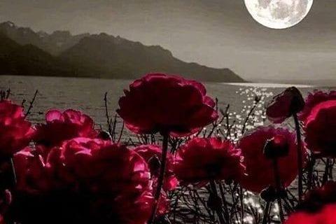Profitez de La Pleine Lune et de ce qu'elle peut vous apporter