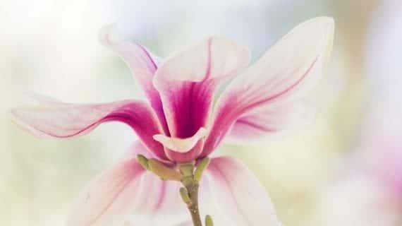 Beignets de Magnolia