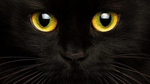 La spiritualité par les Chats
